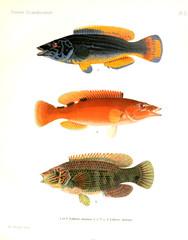 Illustration of a fish