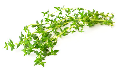 fresh herb, thyme isolated on white