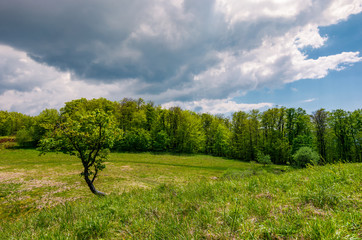 tree on a hump over the grassy meadow among the forest. beautiful nature scenery on a cloudy summer day