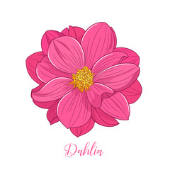 Cute dahlia flower, hand-drawn in cartoon style. Floral background. Element for design, creativity, scrapbooking. Vector illustration.