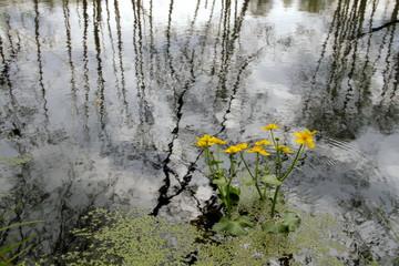 Fototapeta Wiosenny pejzaż obraz