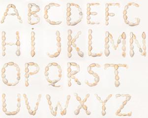 English alphabet of seashells, letters on white background, isolated alphabet, schooling,...