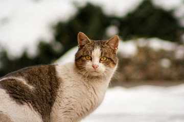 A cat with beautiful eyes standing on concrete in winter