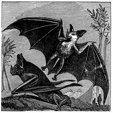 victorian engraving of vampire bats