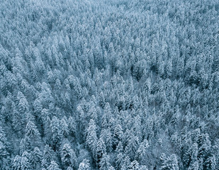 Aerial of a snowy pine forest on a cloudy day at lake Eibsee, Germany