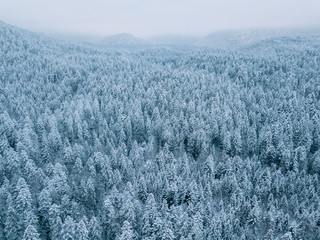 Aerial of a snowy pine forest on a cloudy day with mountains in the background at lake Eibsee, Germany