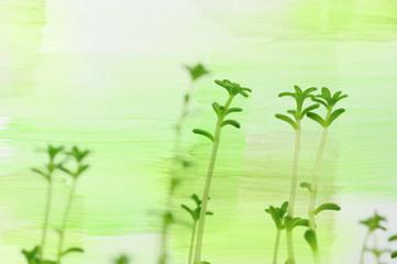 botanical green background