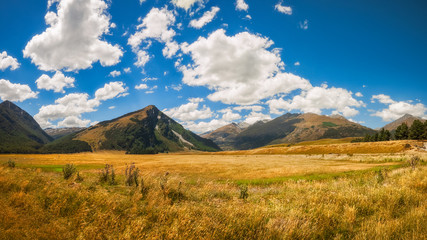 New Zealand landscape with golden grasses in the South Island