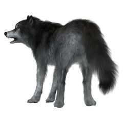 Dire Wolf Tail - The Dire Wolf was a prehistoric carnivore that lived in North and South America during the Pleistocene Period.