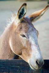 young donkey on a sunshine