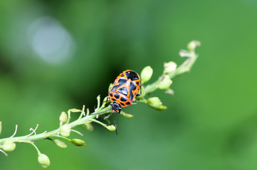 As bugs, taken in the wild nature environment