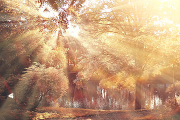 autumn landscape / sunrays in autumn trees. Sunset in the forest with yellow leaves. Indian summer for a walk in the autumn park. Glare and sun rays concept of landscape in nature