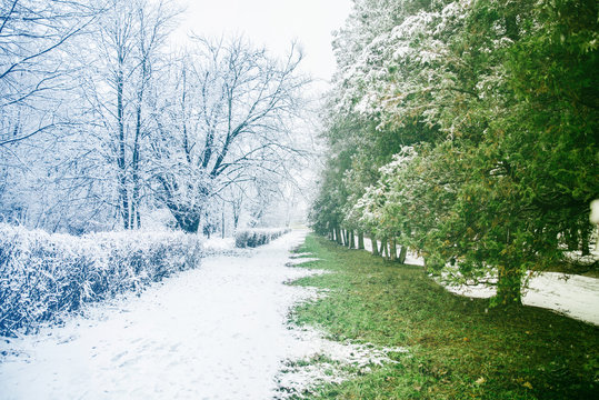 place where winter meet with spring in city park