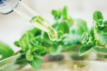 Fototapeta Mint extract. Medicinal plants. Selective focus.   obraz