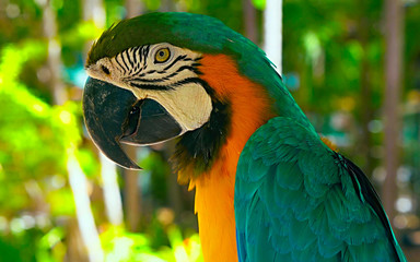 Close up face of Macaw
