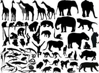 isolated south animals black silhouettes Wall mural
