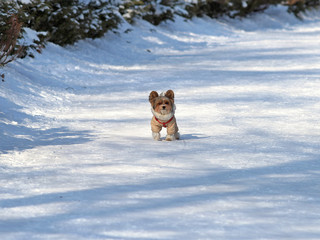 the beautiful doggie in a ski suit walks on the snow-covered park