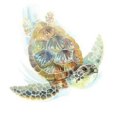 Watercolor illustration of a green sea turtle