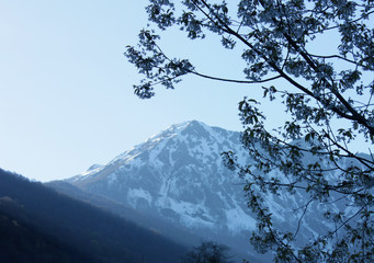 Spring. Branch of flowering tree on background of mountains