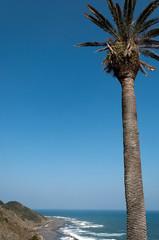 椰子の木と日南海岸