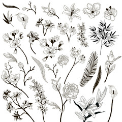 Vector Collection of Drawn Floral Design Elements