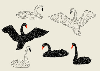 Set of black and white swans. Hand drawn birds