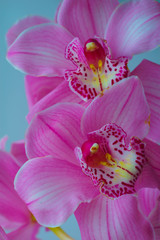 The Orchid flowers Beautiful floral background for greeting cards, wallpapers, covers, screen savers, posters, wedding invitations