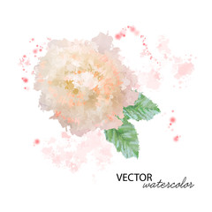 Watercolor Peony Flower