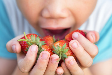 Close up Strawberry fruit on Boy hand