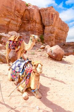 two camels in the desert, Wadi Ram Jordan