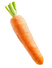 Fresh carrot isolated on white background
