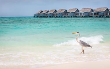 Grey heron on sandy beach