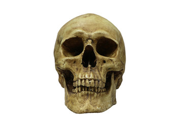 Front of human skull isolate on whithe background, with clipping path..