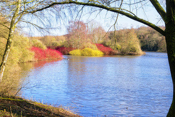 Vibrant colours on a small island out on the lake