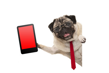 frolic business pug puppy dog with red tie and glasses, holding up tablet phone with blank red screen, hanging sideways from white banner, isolated