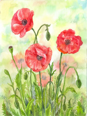 Red watercolor poppies illustration