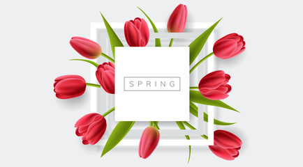 White frame with red tulip flower and green leaf. Realistic vector illustration for spring and nature design, banner with square frame
