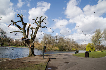 Photograph of birds in a park in London.