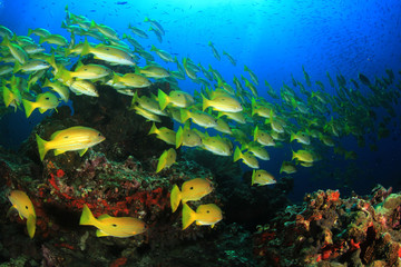Fish on underwater coral r eef
