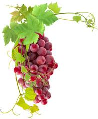 Wall Mural - grappe de raisins rosés et vigne