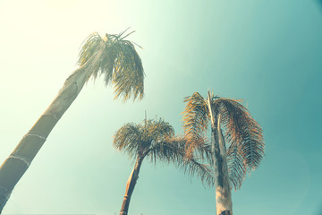 Summer photo of palms and vintage color