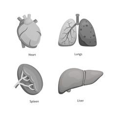 Cartoon human organs set. Anatomy of body vector cartoon illustrations