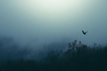 bird flying over misty forest, dark fantasy landscape