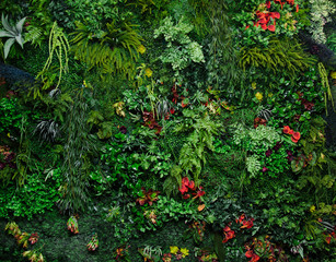 wall with greenery