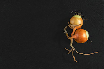 Orange raw two onions on black stone surface. Top view, copy space.