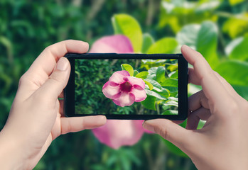 Female hand taking picture of tropical flower on La Digue island on mobile phone. Picture of Seychelles island on smart phone