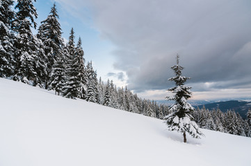 Scenic view of trees on snowcapped mountain