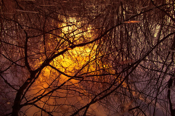 Thicket of forest and the fog is illuminated by sun, bright sunset