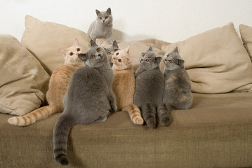 Viele Katzen auf einem Sofa sehen nach oben