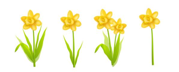 Daffodils realistic illustration